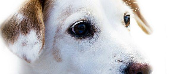 dog name generator